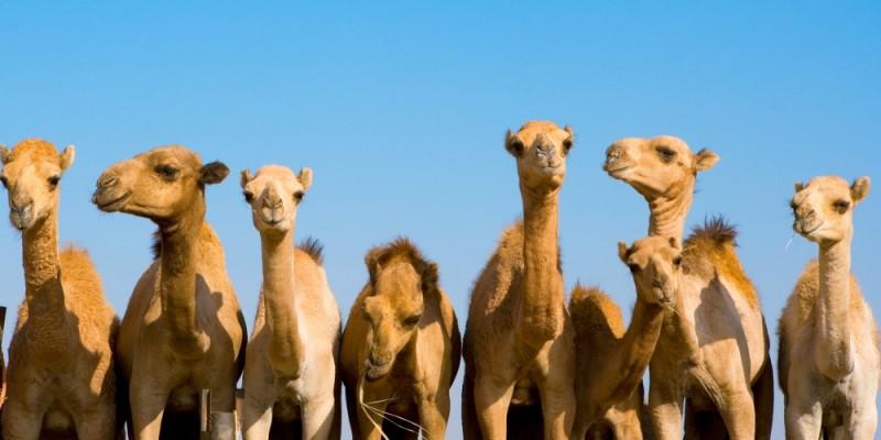 I cammelli di Abramo e i segreti dello Zodiaco