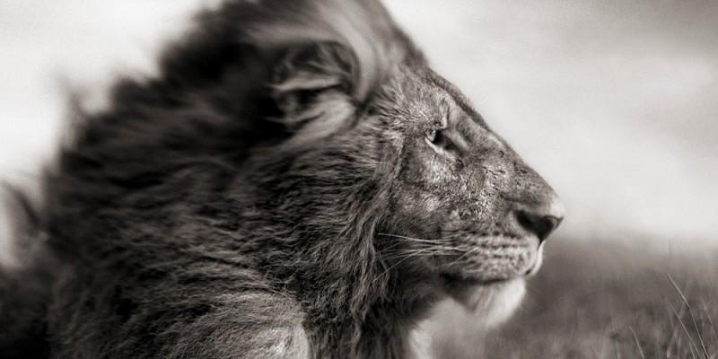 La verità è come un leone
