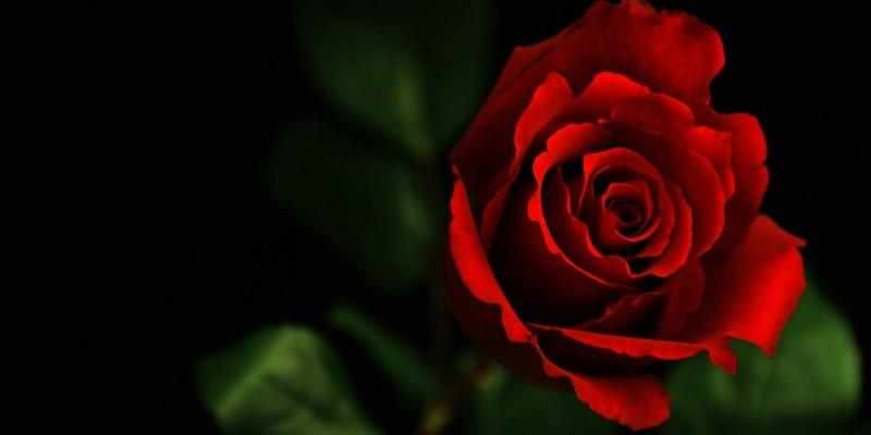 La rosa di Paracelso